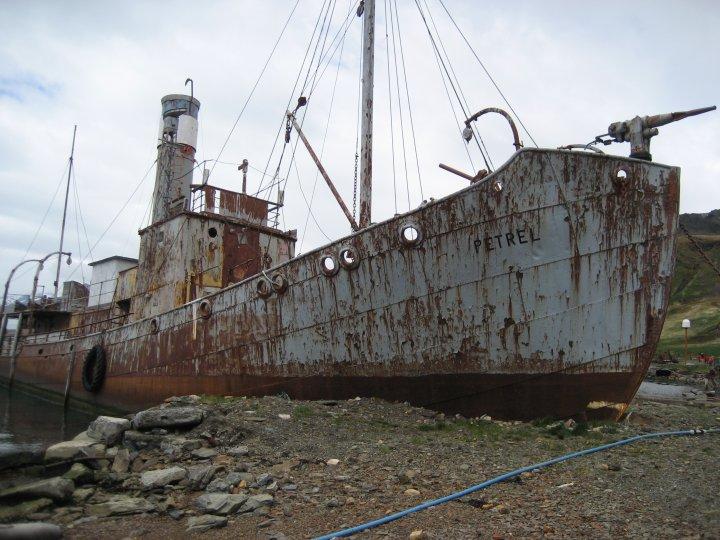 Whalecatcher Petrel.