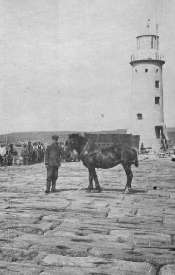 Horses were frequently used on the Breakwater.